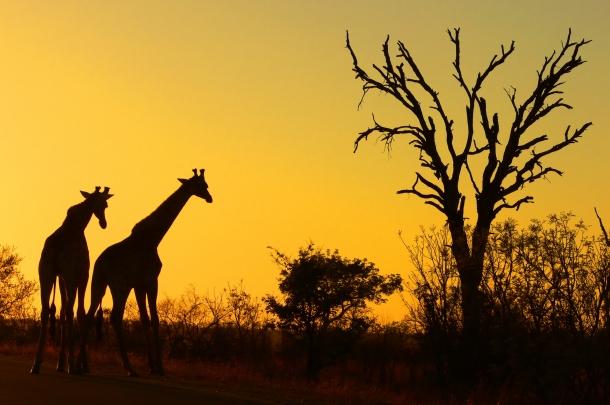 Kruger Park - Maiores Parques Naturais do Mundo